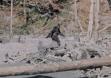 bigfoot-film_fe